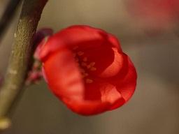 春を探して植物園に、百花園に!! その2 向島百花園_b0175688_178582.jpg