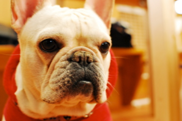 My Dog_f0136098_22322183.jpg