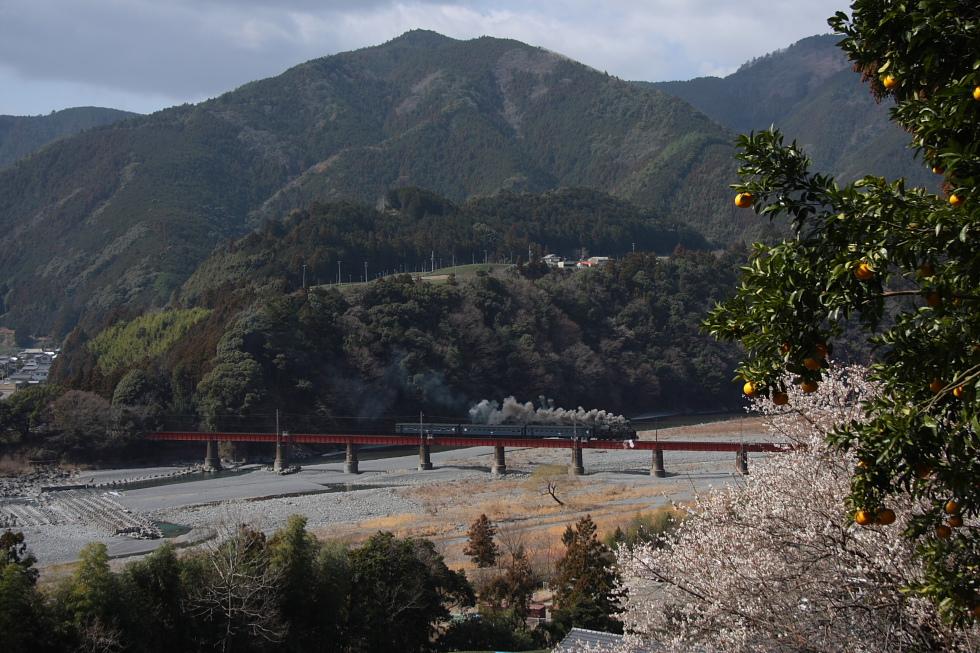 梅とみかんと良煙と第一鉄橋 - 2011早春・大井川 -_b0190710_20384197.jpg