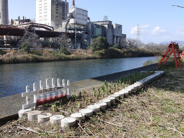 田宿川・滝川・沼川のお花見ウォーク その1_f0141310_7325755.jpg