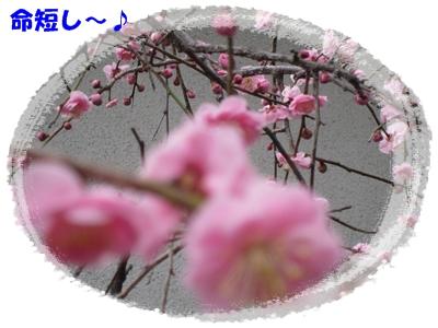 b0167519_91186.jpg