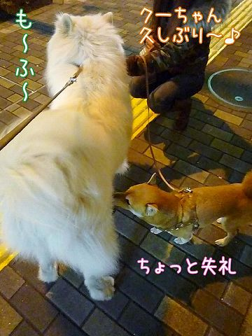 友達いな~いおっきな公園_c0062832_19581618.jpg