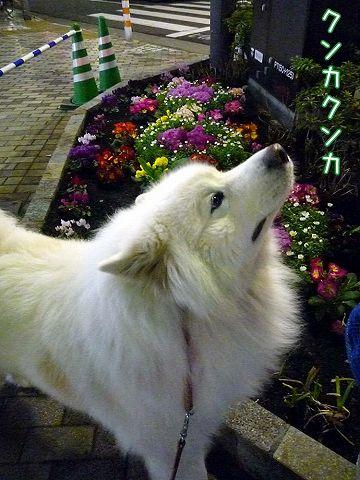 友達いな~いおっきな公園_c0062832_1958226.jpg