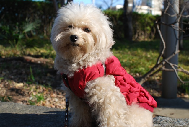 愛犬の為整体教室のお知らせ_c0099133_11502726.jpg