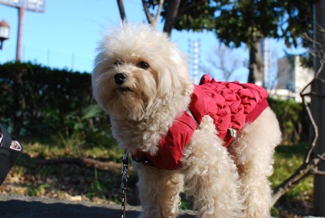 愛犬の為整体教室のお知らせ_c0099133_1151846.jpg