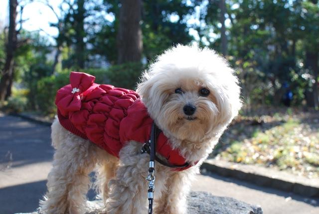 愛犬の為整体教室のお知らせ_c0099133_11521378.jpg
