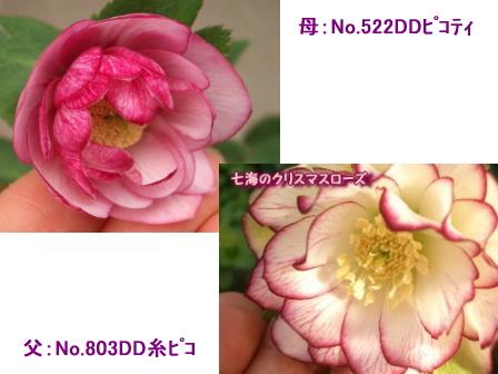 c0025140_22274361.jpg