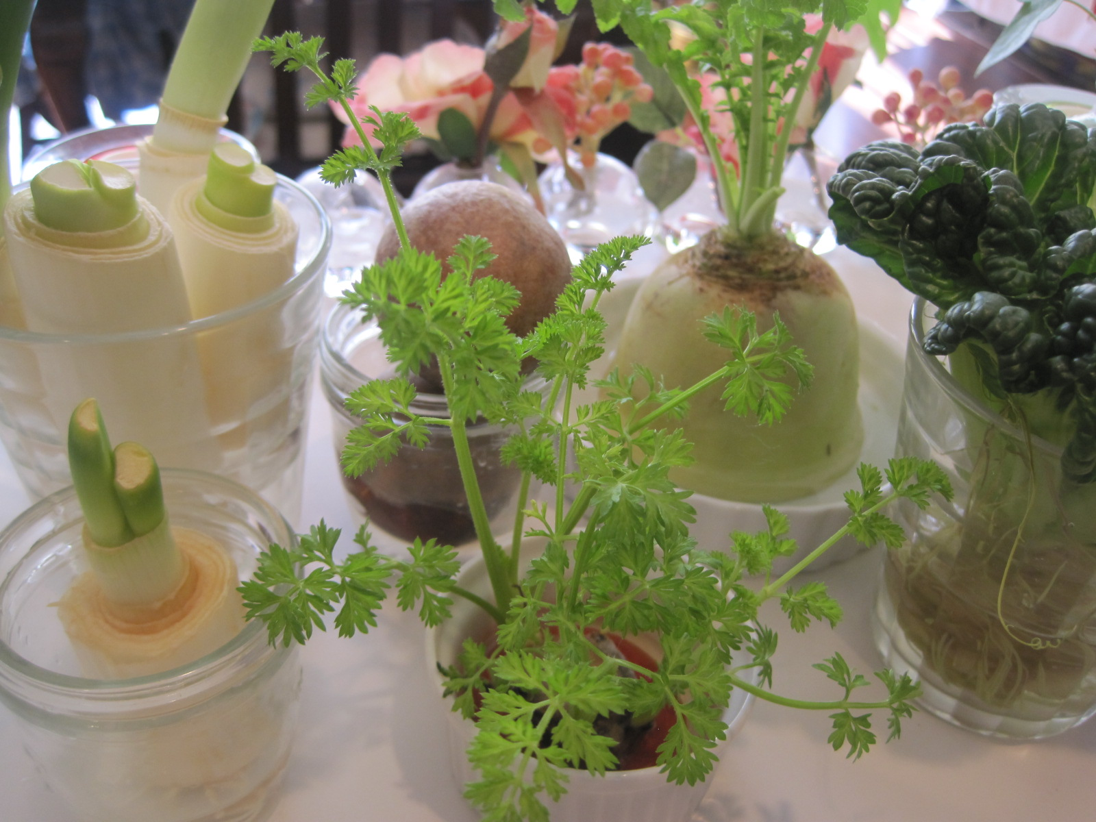 野菜クズで、ECO菜園?_f0236260_23203072.jpg