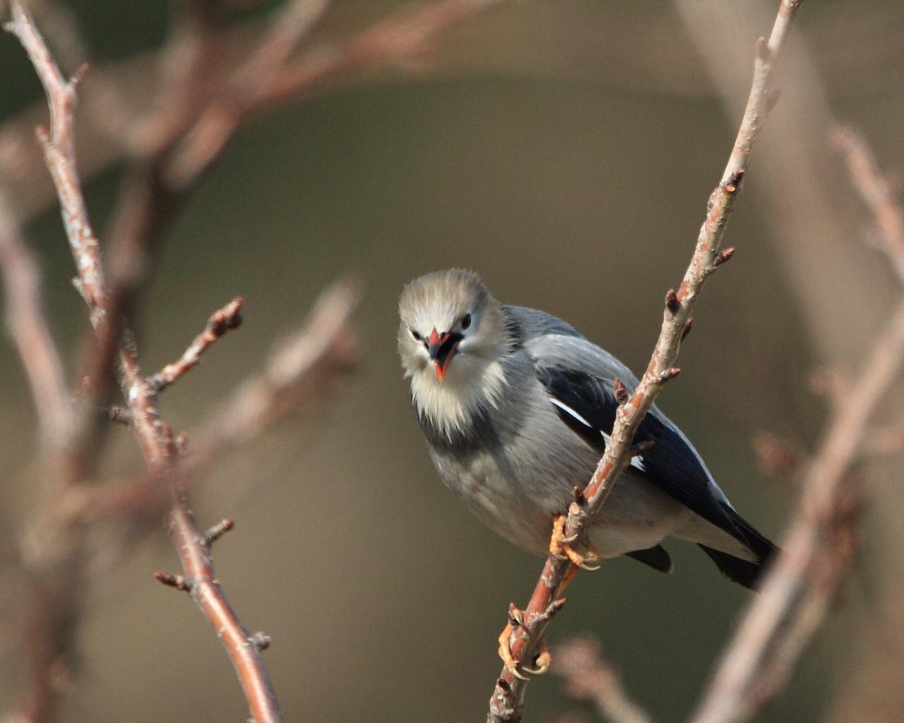 二度目の珍鳥その2_f0105570_21503854.jpg