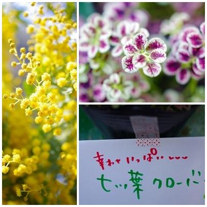 森の工房 hana花*marche!! 春が来た!!_c0207890_224066.jpg