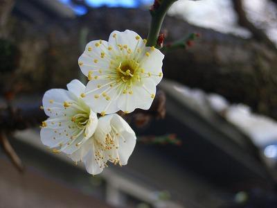 もうすぐ春_e0114895_0511177.jpg