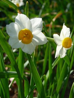 もうすぐ春_e0114895_0513738.jpg