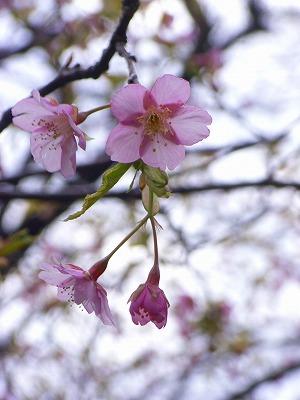 もうすぐ春_e0114895_056510.jpg