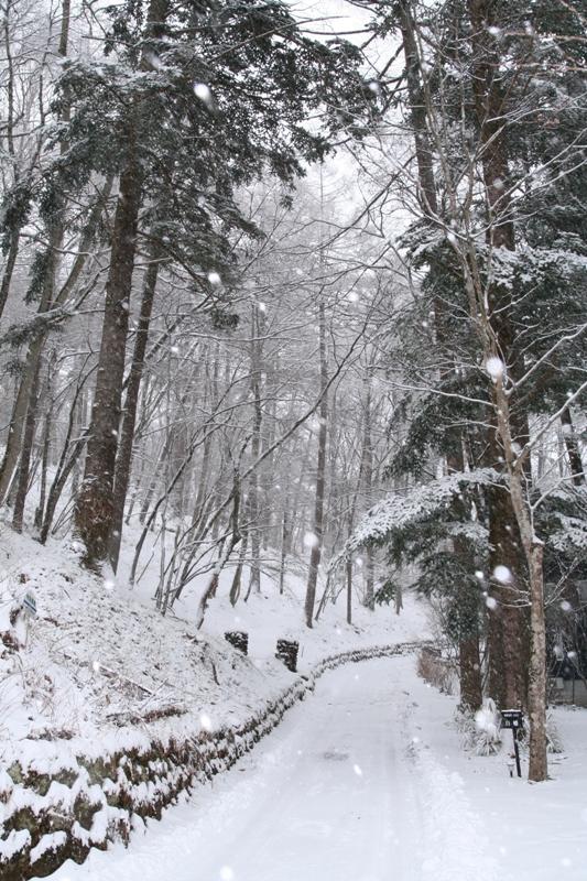 2月の終わりは雪の日_f0091207_159209.jpg