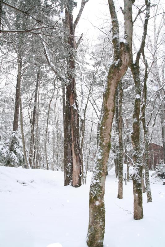 2月の終わりは雪の日_f0091207_1593841.jpg