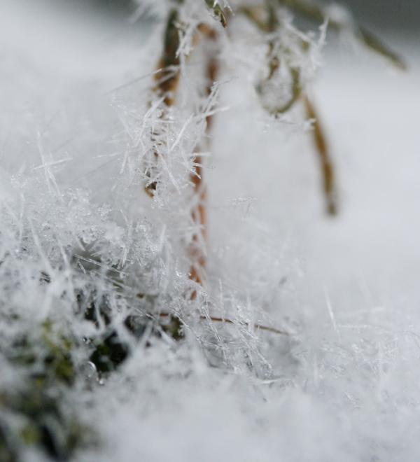 2月の終わりは雪の日_f0091207_265422.jpg