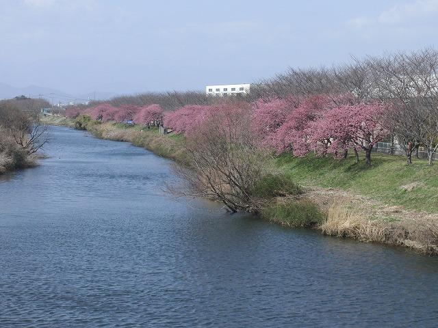 田宿川・滝川・沼川のお花見ウォーク その2_f0141310_6594512.jpg
