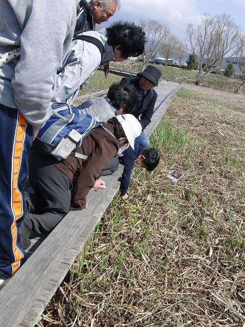 田宿川・滝川・沼川のお花見ウォーク その2_f0141310_752785.jpg