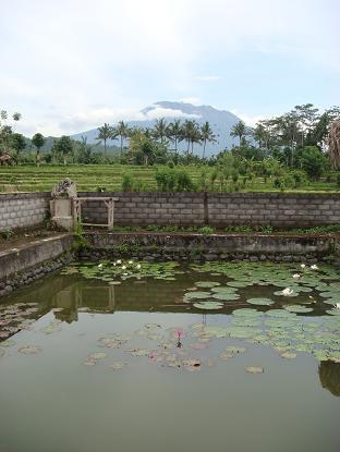 プラ・ジュンプンガンの睡蓮 Bunga Tunjung di Pura Taman Jumpungan _a0120328_113333.jpg