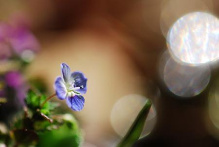 ■風の谷の春の花■_f0080530_17351124.jpg