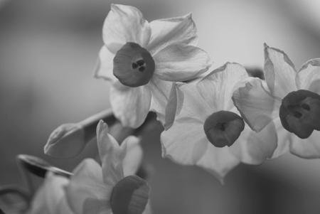 ■風の谷の春の花■_f0080530_17352454.jpg