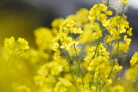 ■風の谷の春の花■_f0080530_17355376.jpg