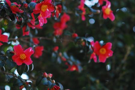 ■風の谷の春の花■_f0080530_17363082.jpg