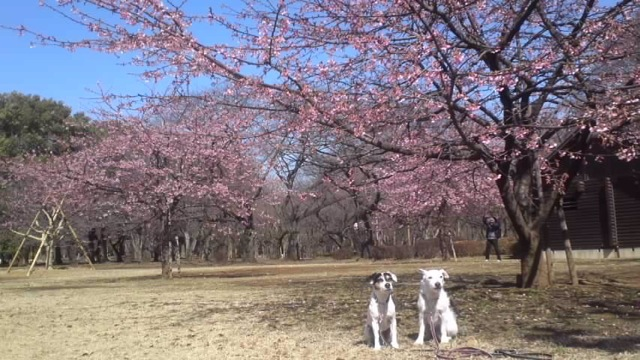 「愛犬の為の飼い主トレーニング教室」始めます_c0099133_12224661.jpg