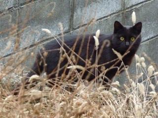 そと猫のお友だち きょんちゃん編。_a0143140_22244170.jpg