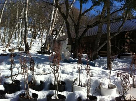 長野の森の幼稚園「こどもの森幼稚園」を訪れて_f0037258_1362062.jpg