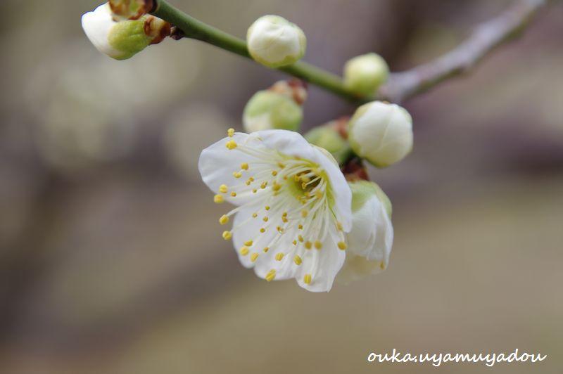 京都国立博物館 筆墨精神_a0157263_2352087.jpg