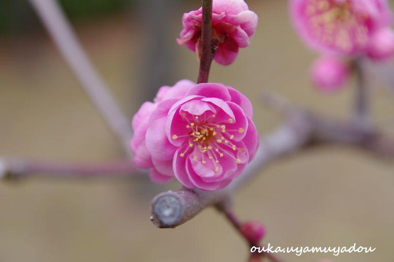 京都国立博物館 筆墨精神_a0157263_2352610.jpg