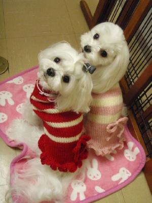 可愛い手編みのワンピとカリファミリー5マルちゃん_b0001465_17104659.jpg