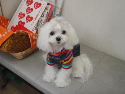 可愛い手編みのワンピとカリファミリー5マルちゃん_b0001465_1719252.jpg