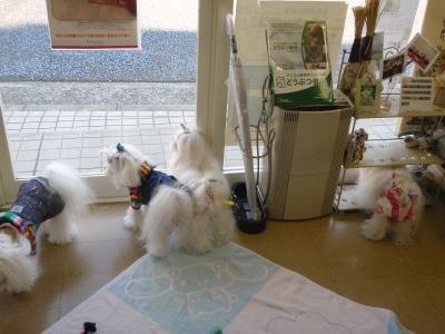 可愛い手編みのワンピとカリファミリー5マルちゃん_b0001465_1722225.jpg