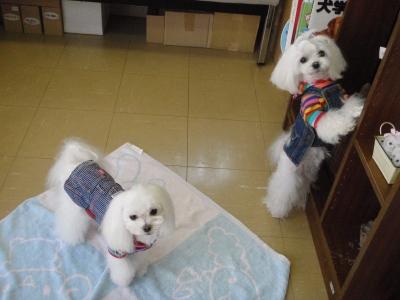 可愛い手編みのワンピとカリファミリー5マルちゃん_b0001465_17225114.jpg
