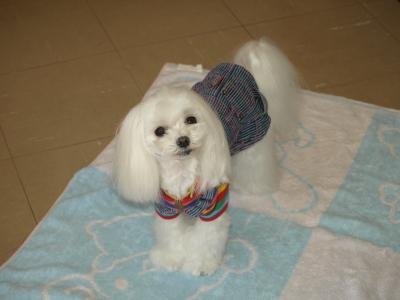 可愛い手編みのワンピとカリファミリー5マルちゃん_b0001465_1740241.jpg
