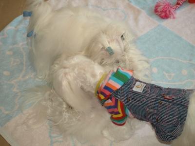 可愛い手編みのワンピとカリファミリー5マルちゃん_b0001465_17494656.jpg