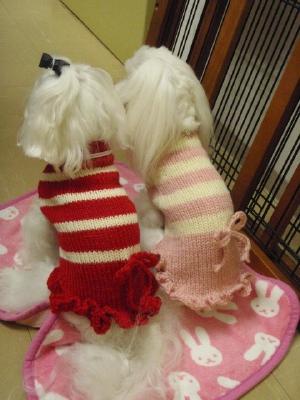 可愛い手編みのワンピとカリファミリー5マルちゃん_b0001465_1792046.jpg