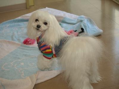 可愛い手編みのワンピとカリファミリー5マルちゃん_b0001465_180435.jpg