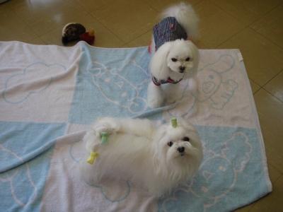 可愛い手編みのワンピとカリファミリー5マルちゃん_b0001465_18122185.jpg