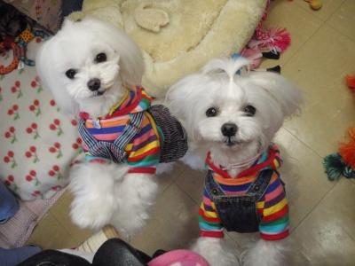可愛い手編みのワンピとカリファミリー5マルちゃん_b0001465_1822156.jpg
