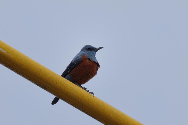 鳥さん12種_f0053272_2233026.jpg