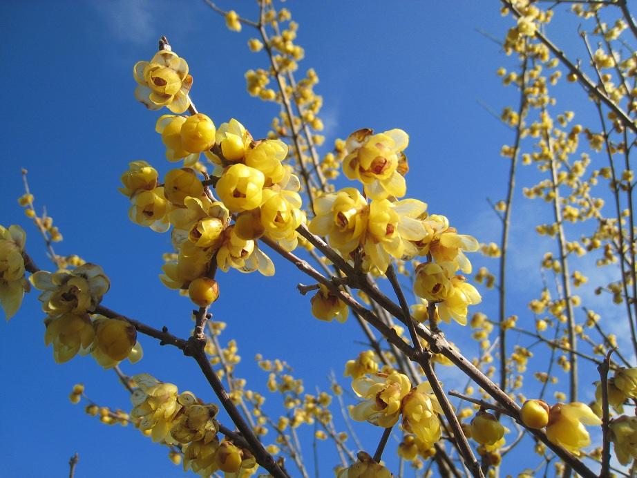 春が近づいて           _a0107574_6513345.jpg
