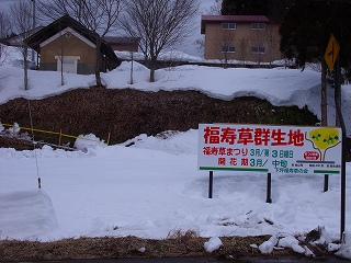 福寿草まつり_d0122374_222211.jpg