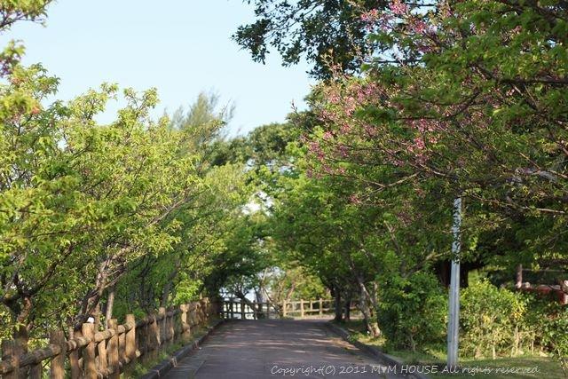 和中華 ☆ 最後の桜便り♪_c0139375_1592696.jpg