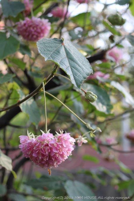 和中華 ☆ 最後の桜便り♪_c0139375_1594911.jpg