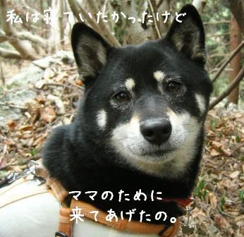 梅とあんひま_f0068501_0141155.jpg