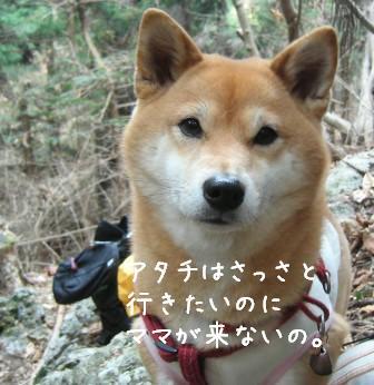 梅とあんひま_f0068501_01602.jpg