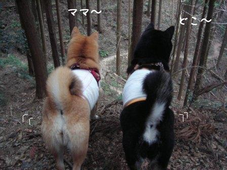梅とあんひま_f0068501_0172611.jpg